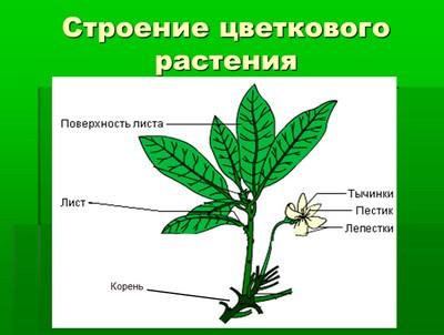 Реферат по биологии 6 класс растения скачать екологічні проблеми україни реферат скачать