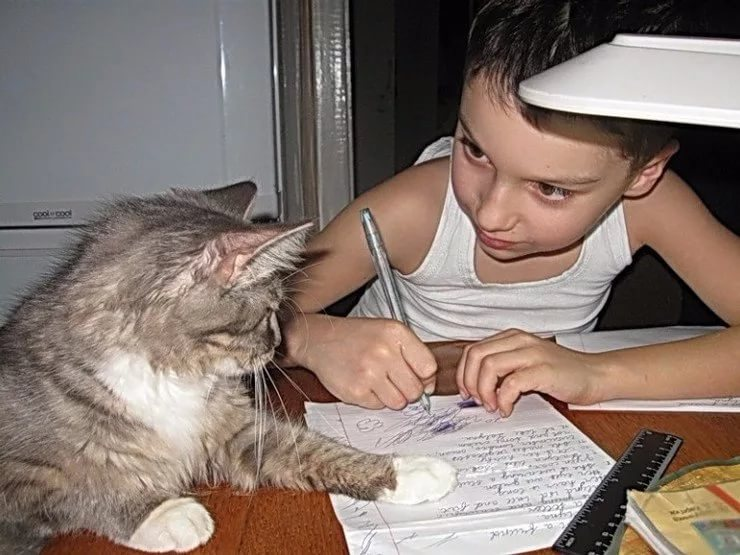 делаем домашнюю работу с кошкой